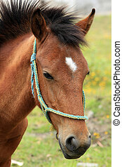 Face of a Young Brown Horse