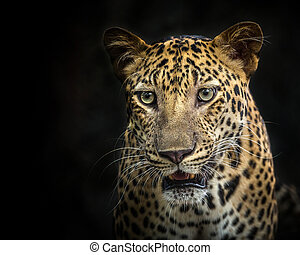 Face of leopard.