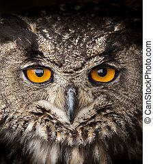 Face portrait of Eagle Owl, Bubo bubo.