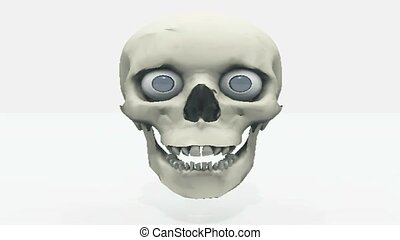 Face skeleton