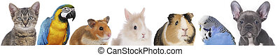 faces of different pets - line of different pets, heads of ...