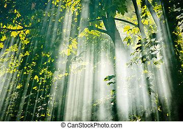 fada, luz solar, em, floresta