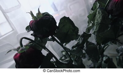 faded flowers Roses stand in a vase - faded flowers Roses...
