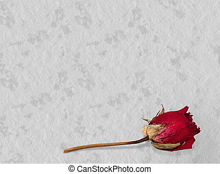 Faded rose - time passes, loving memory concept - Grey...