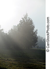 Fag - Fog above green grass and trees