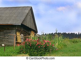 faház, virágágyás, falusias, roses., vidéki