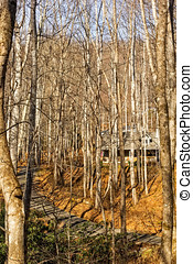 fahasáb faház, alatt, a, erdő