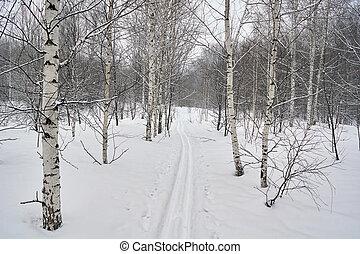 fahren ski spur, auf, a, verschneiter , wald, glade.