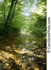 faia, floresta, árvores, com, rio, fluxo, sob