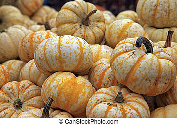 Fair of a pumpkins in California