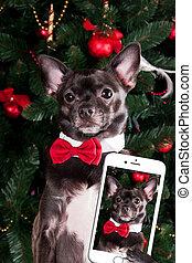 faire, selfie, chien