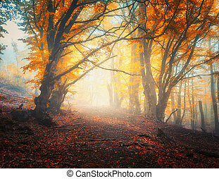 Fairy autumn forest with trail in fog. Trees in fall colors
