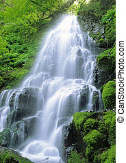Fairy Falls - a waterfall in the Columbia River Gorge area,...