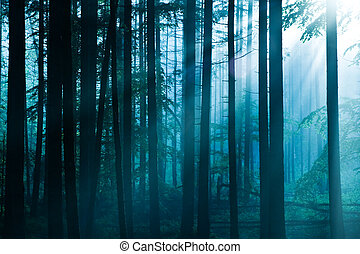 forest - fairy tale fir tree forest