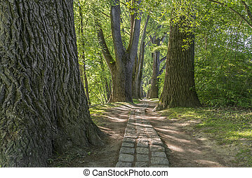 Fairy tale path in a forest with the sun shining through the green leaves in Regensburg