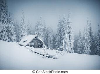 Fairy-tale woodland. Location Carpathian, Ukraine, Europe...