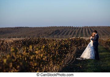 fairytale, romantikus összekapcsol, közül, newlyweds, ölelgetés, -ban, napnyugta, alatt, szőlőskert, mező, wth, bokrok, körülvevő, azokat