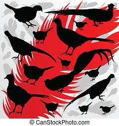 faisão, pássaro, detalhado, caça, estação, silhuetas, ilustração, cobrança, fundo, vetorial