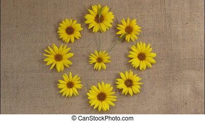 fait, horloge, défaillance, arrêter animation mouvement, temps, sunflowers.