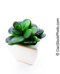 fake green plant on whit background