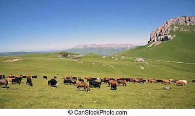 falaise, ensoleillé, alpin, naturel, été, paître, fond, nord...