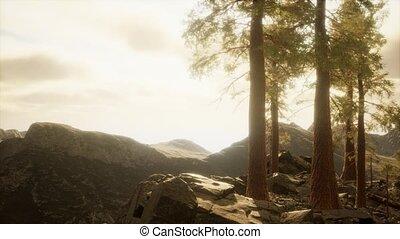 falaise, lumière soleil, arbres