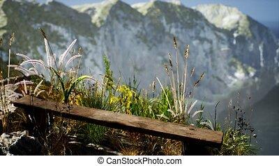 falaise rocheuse, océan, herbe, frais, grand