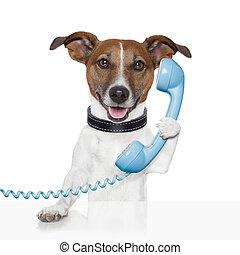 falando, cão, telefone