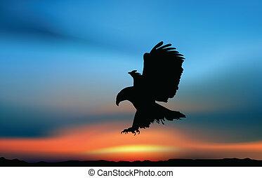 falco, alba