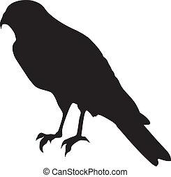 falcon - silhouette of falcon