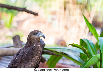 Falcon close up in the park with green