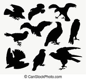 Falcon, eagle, hawk bird silhouette