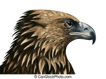 Falcon heads in close-up