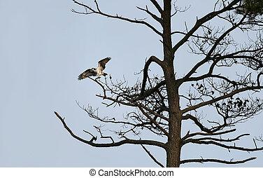 falcon takeoff