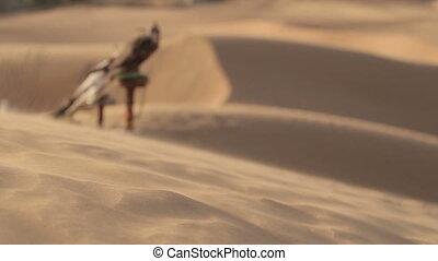 Falcons in desert, Dubai. Wind moves the sand of dunes