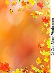 fald, ahorn leaves