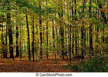 fald, skov, landskab