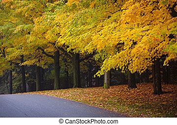 fald, vej, hos, farverig, træer