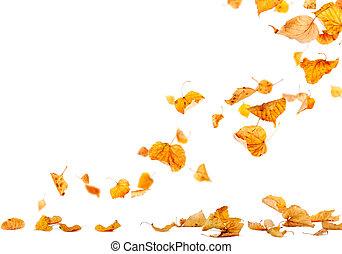 falde blade