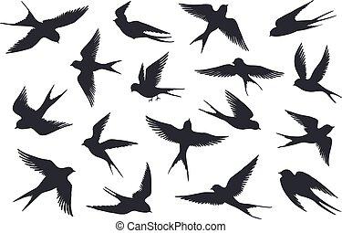 falka, fecske, lépések, vektor, háttér., vagy, tenger sirály, elszigetelt, tengeri madár, repülés, fehér, állhatatos, különböző, silhouette.