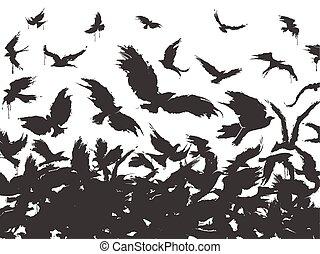 falka, fekete, madarak