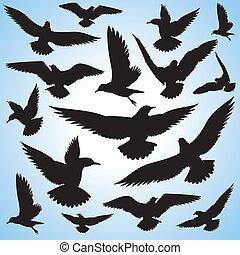 falka, repülés, ég, madarak