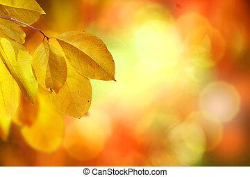 fall., 秋