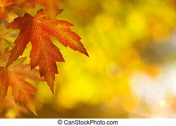fall., 背景, 秋