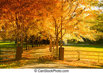 Fall alley - Fall scene: an alley lined with changing trees.