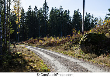Fall at the gravel road
