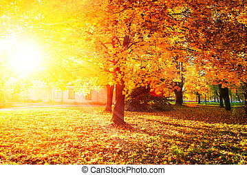 fall., automnal, park., arbres automne, et, feuilles