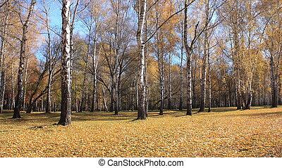 fall., autumn., 公園, 秋