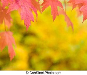 Fall autumn background