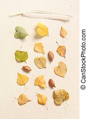 Fall. Autumn composition. with different leaves, nuts and feather.
